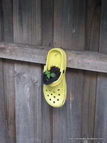 Crocs-xifiction!
